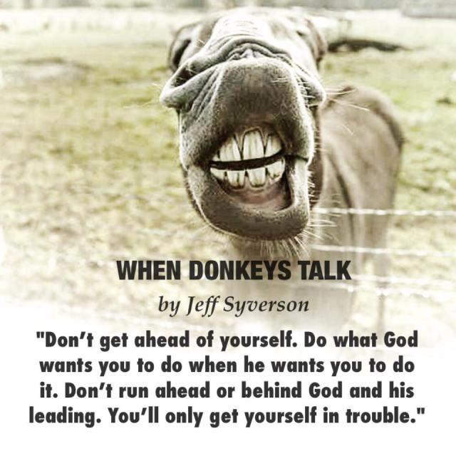 whendonkeys2